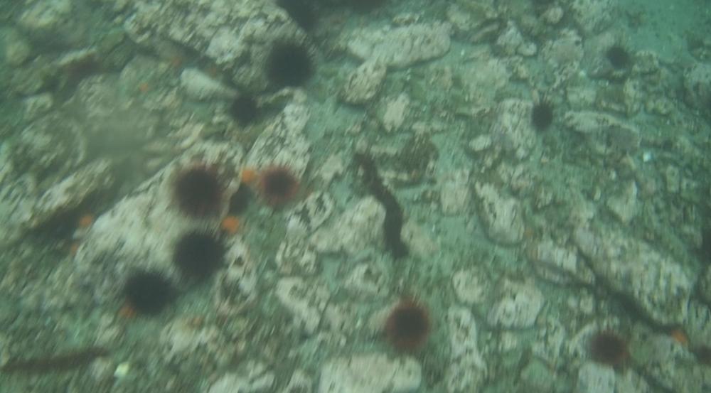 underwater langara island 2 (21).jpg