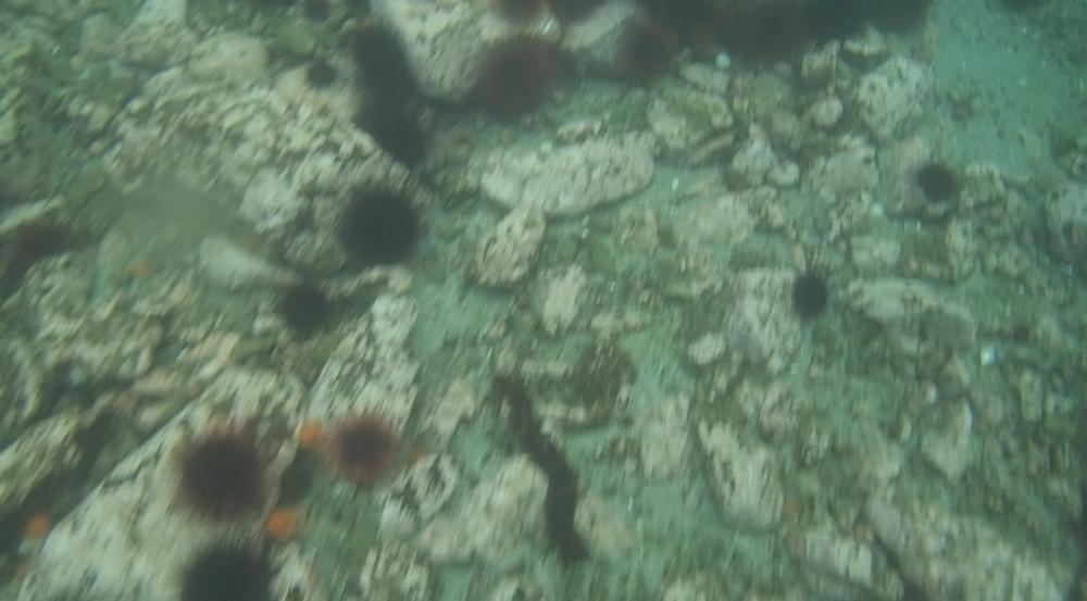 underwater langara island 2 (22).jpg