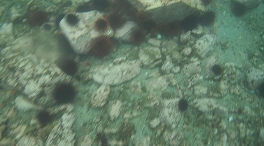 underwater langara island 2 (23).jpg
