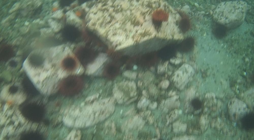 underwater langara island 2 (24).jpg