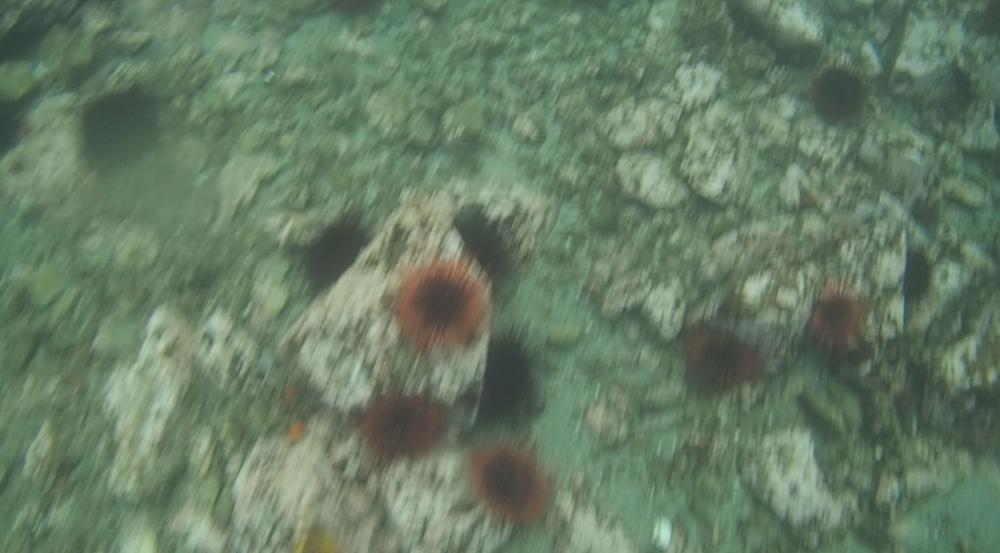 underwater langara island 2 (27).jpg