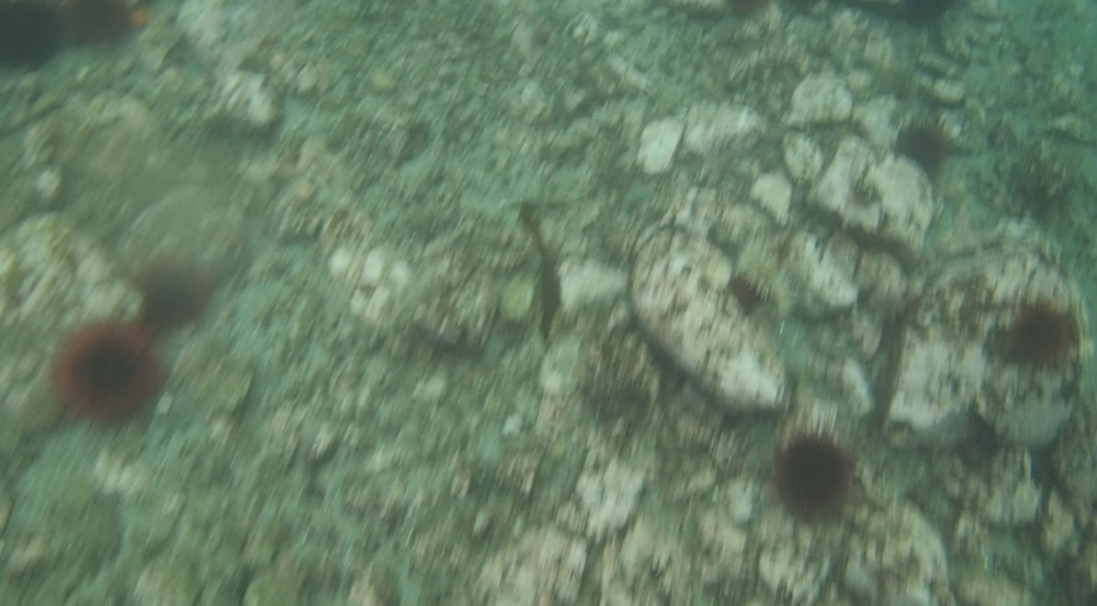 underwater langara island 2 (28).jpg