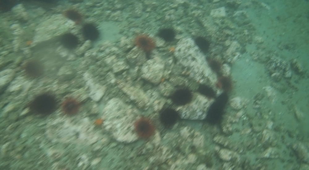 underwater langara island 2 (30).jpg