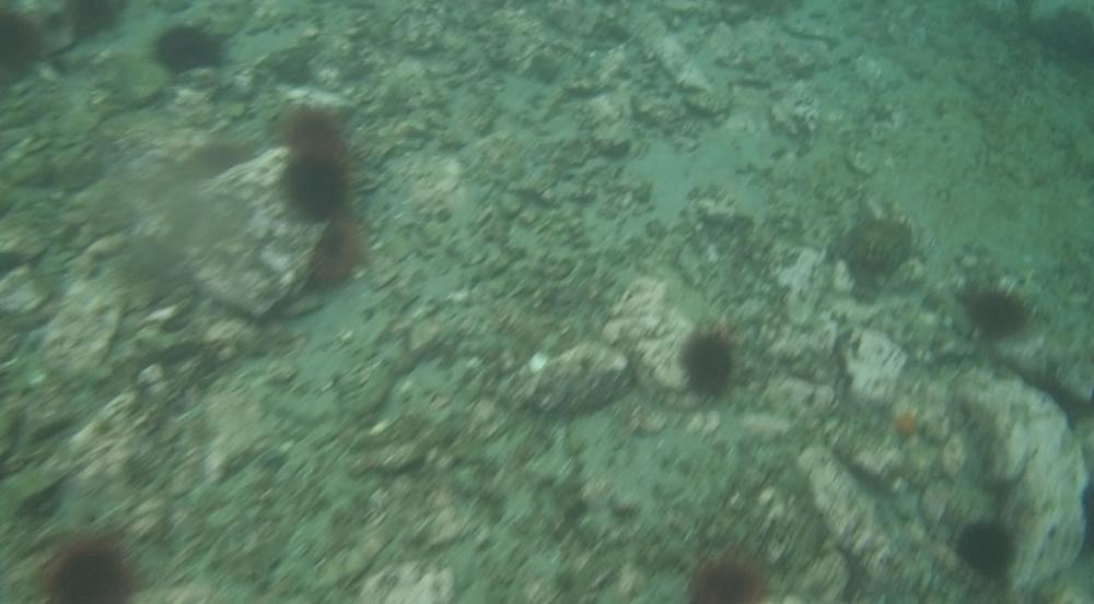 underwater langara island 2 (38).jpg
