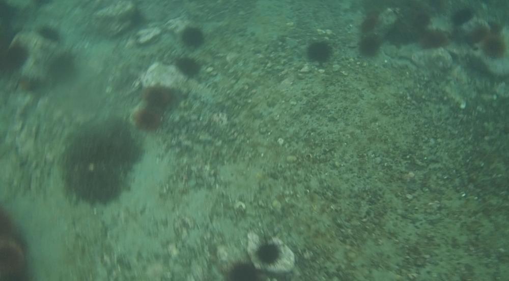 underwater langara island 2 (45).jpg