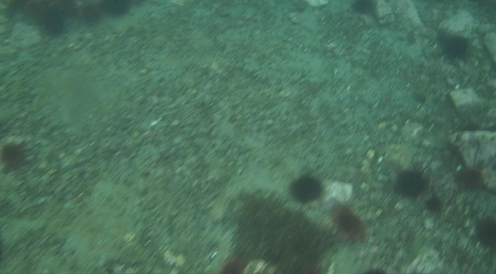 underwater langara island 2 (49).jpg