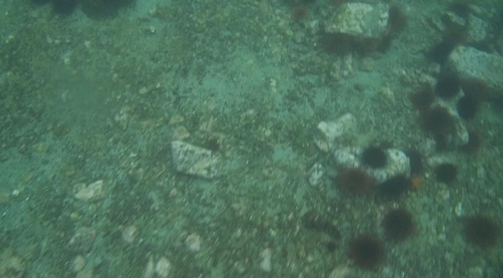 underwater langara island 2 (57).jpg