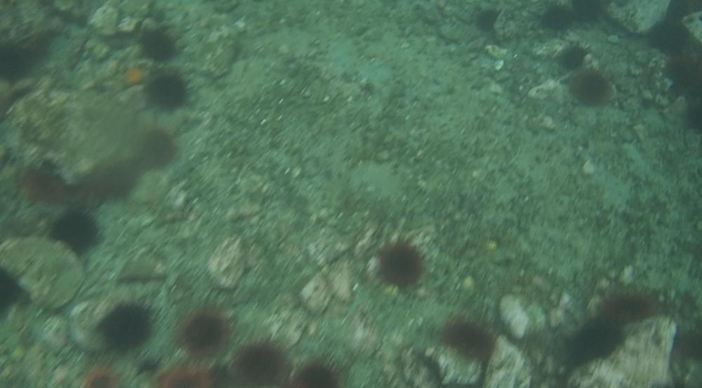 underwater langara island 2 (61).jpg