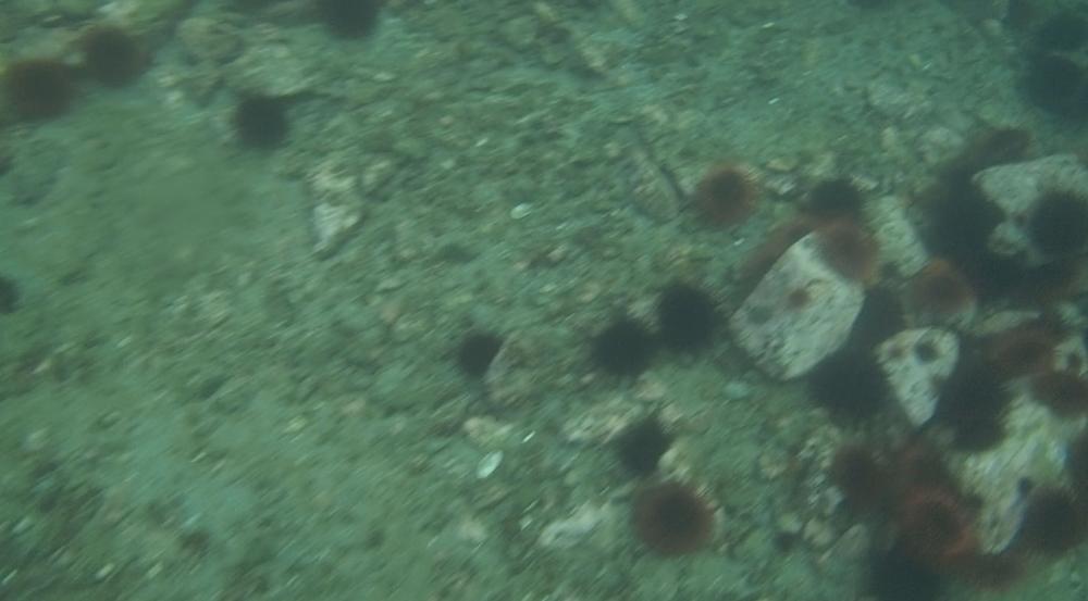 underwater langara island 2 (64).jpg