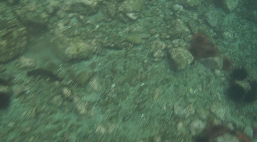 underwater langara island 2 (67).jpg