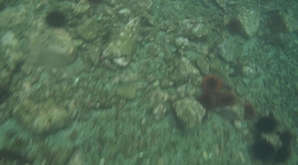 underwater langara island 2 (68).jpg