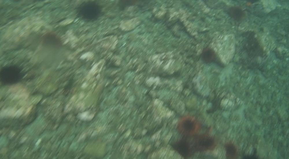 underwater langara island 2 (69).jpg