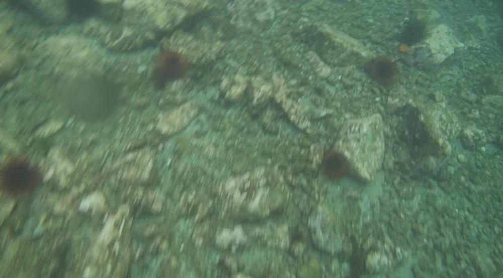underwater langara island 2 (70).jpg