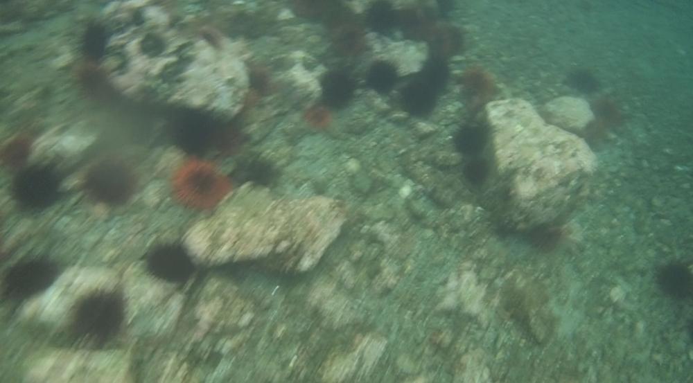 underwater langara island 2 (75).jpg