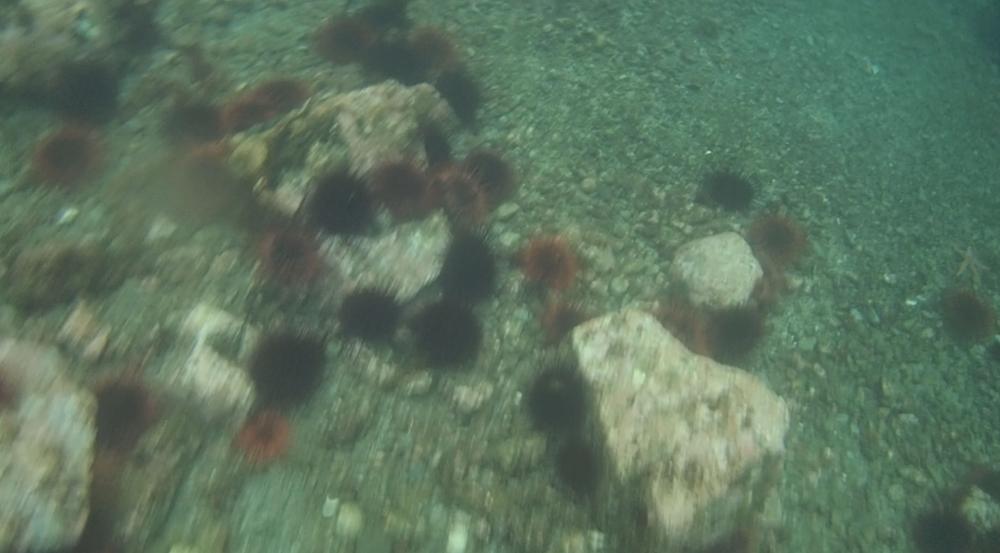 underwater langara island 2 (77).jpg