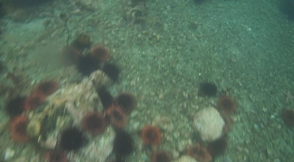 underwater langara island 2 (79).jpg