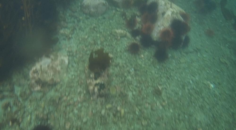 underwater langara island 2 (81).jpg