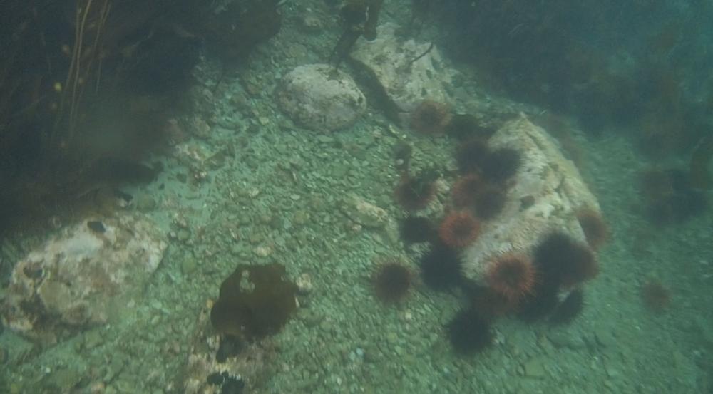 underwater langara island 2 (82).jpg