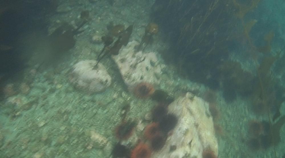 underwater langara island 2 (85).jpg