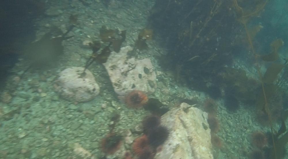 underwater langara island 2 (86).jpg