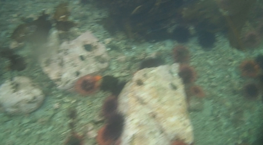 underwater langara island 2 (88).jpg