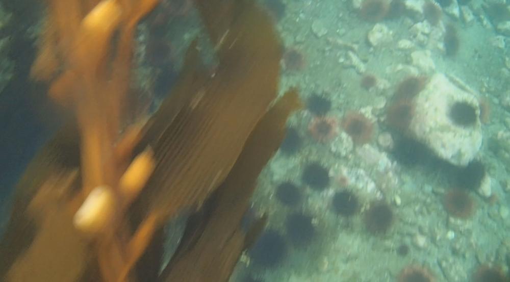 underwater langara island 2 (96).jpg