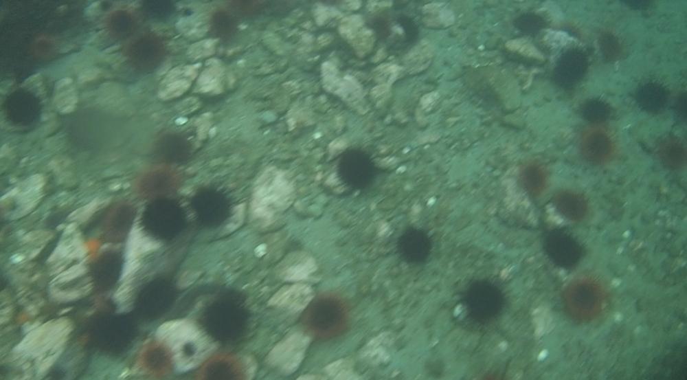 underwater langara island 2 (111).jpg