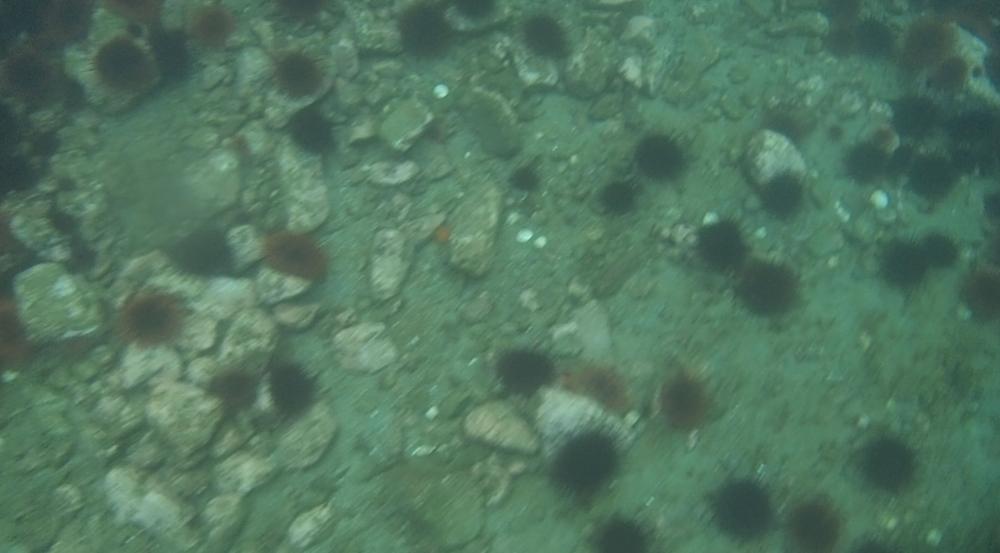 underwater langara island 2 (115).jpg
