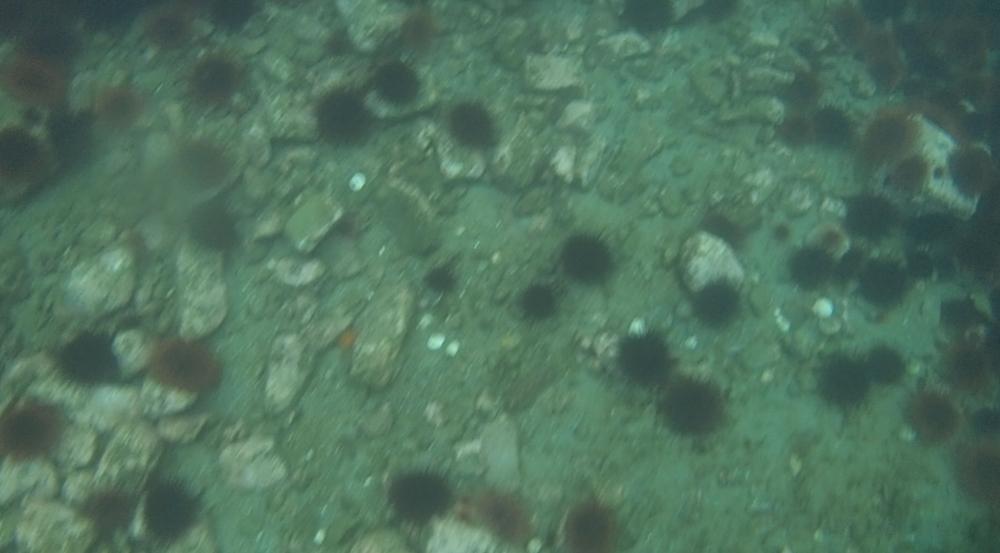 underwater langara island 2 (116).jpg