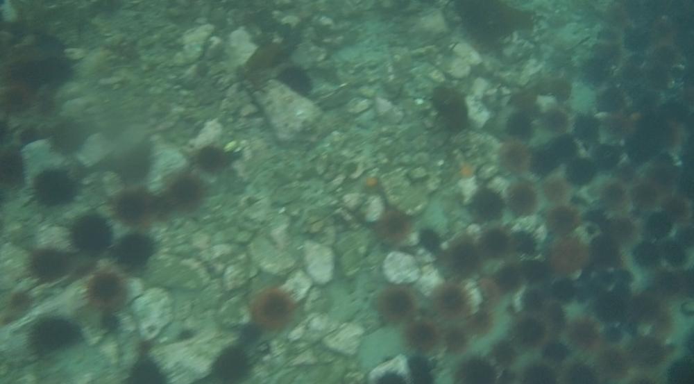 underwater langara island 2 (122).jpg
