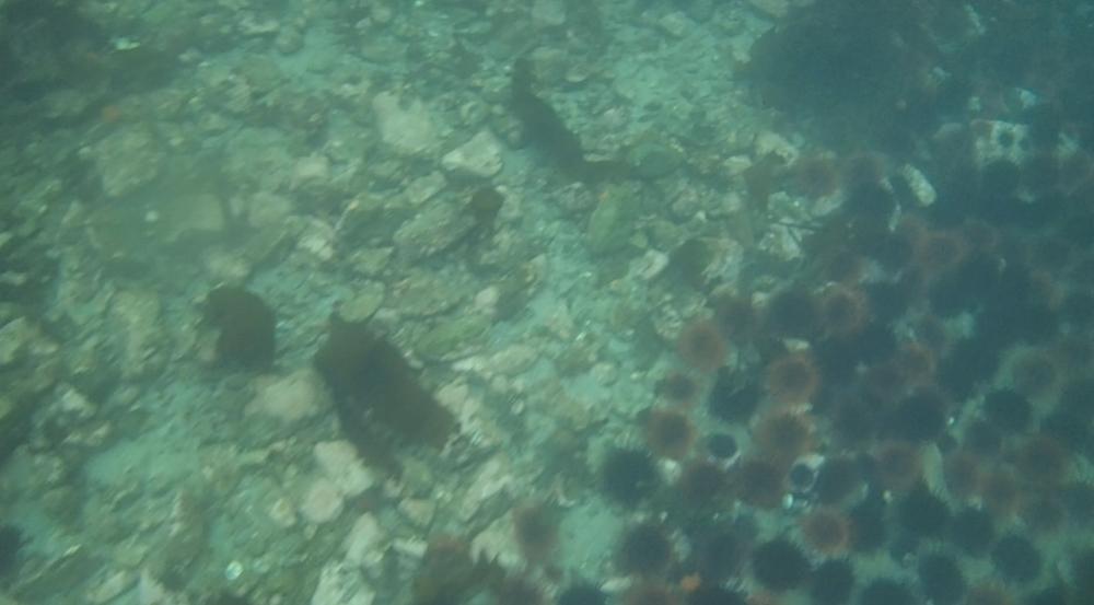 underwater langara island 2 (127).jpg
