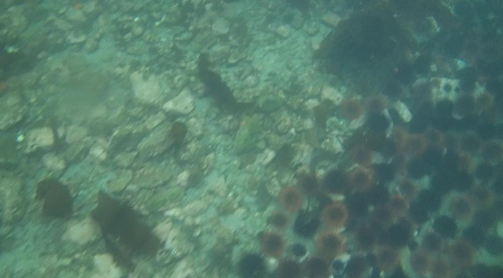 underwater langara island 2 (128).jpg