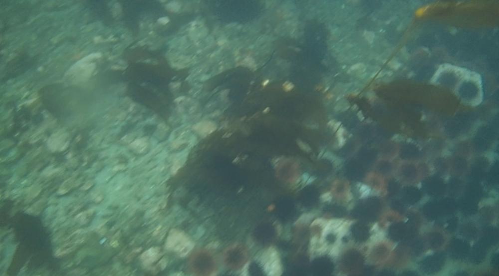 underwater langara island 2 (132).jpg