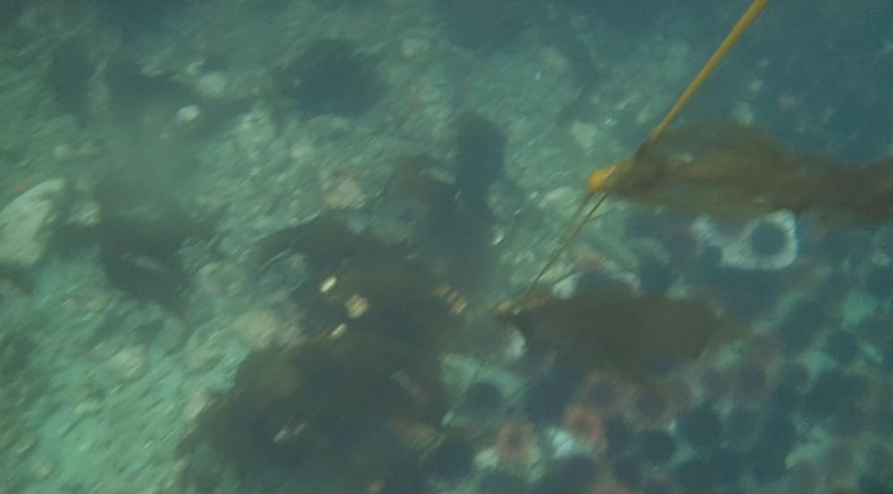 underwater langara island 2 (133).jpg
