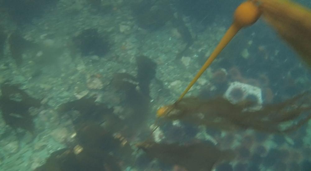 underwater langara island 2 (134).jpg