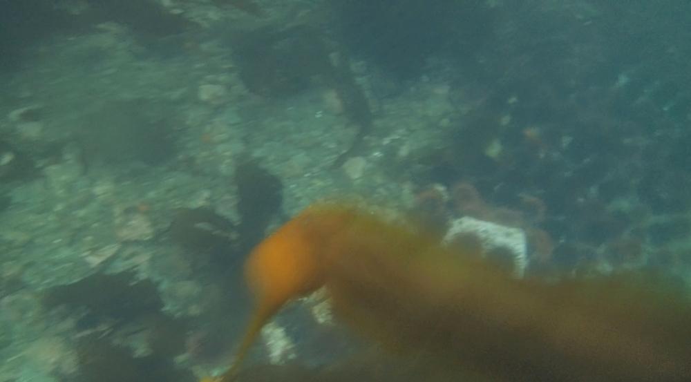 underwater langara island 2 (135).jpg