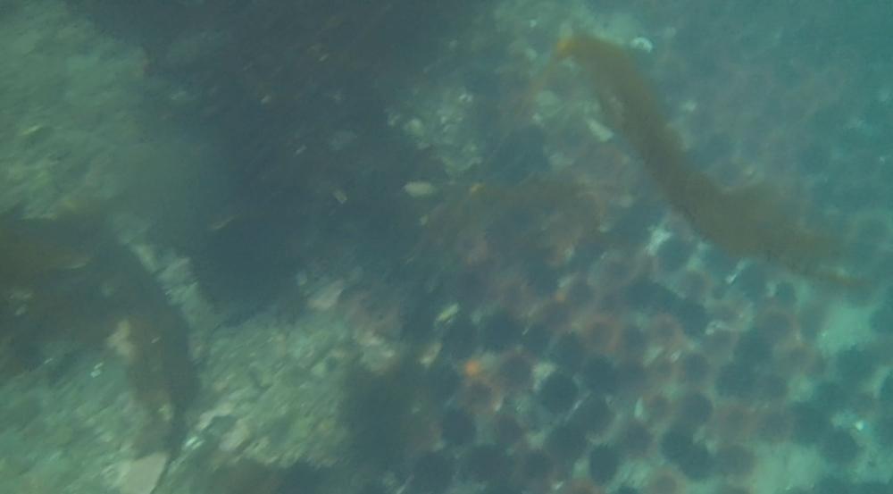 underwater langara island 2 (140).jpg