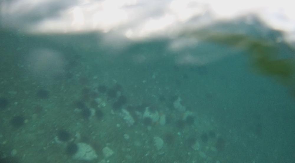 underwater langara island 2 (169).jpg