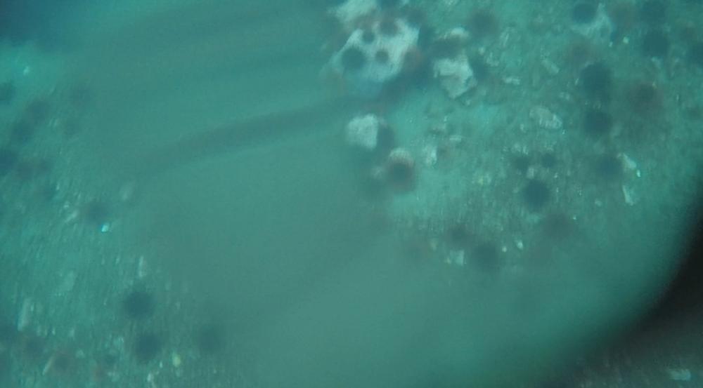 underwater langara island 2 (186).jpg