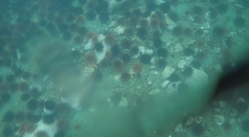 underwater langara island 2 (191).jpg