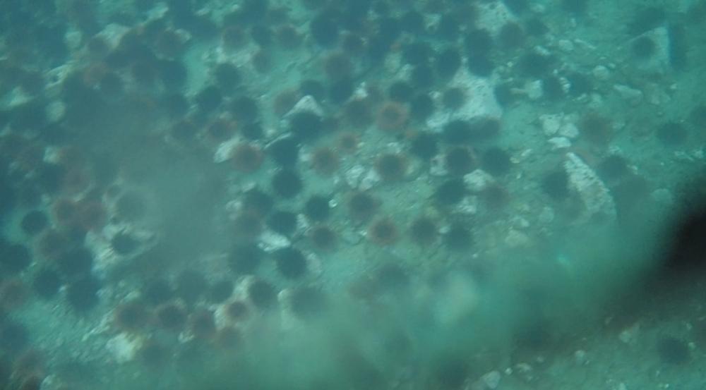 underwater langara island 2 (195).jpg