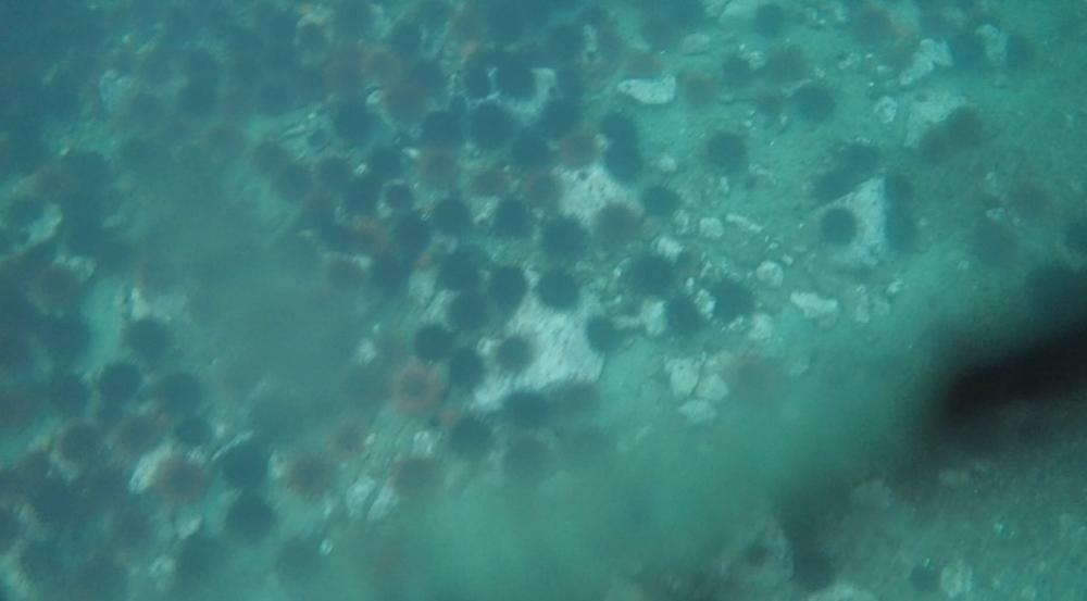 underwater langara island 2 (198).jpg