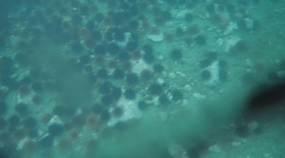 underwater langara island 2 (199).jpg