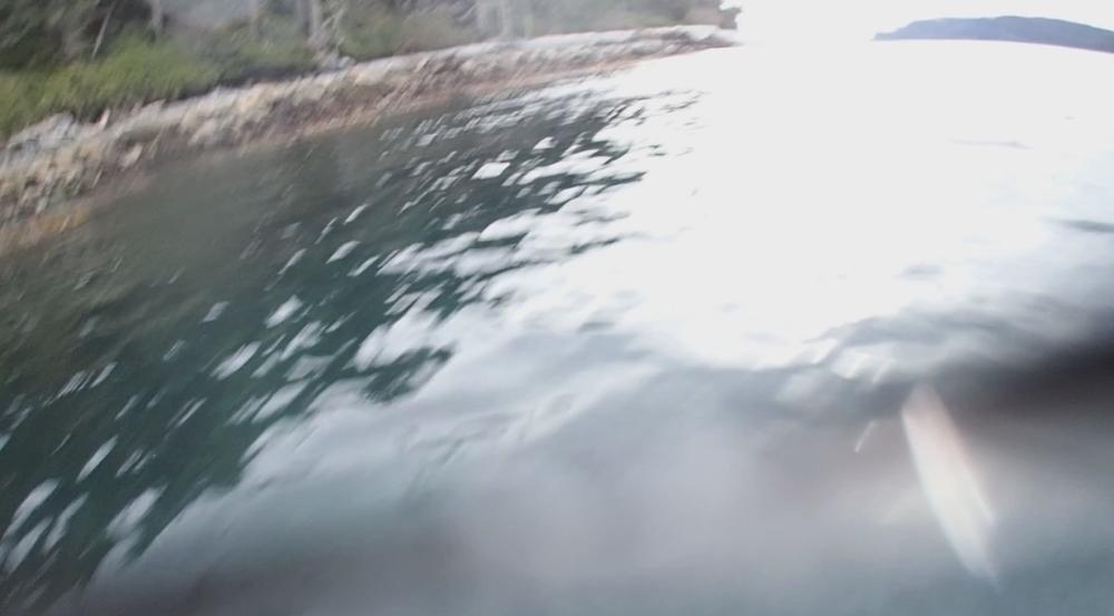 underwater langara island 2 (206).jpg