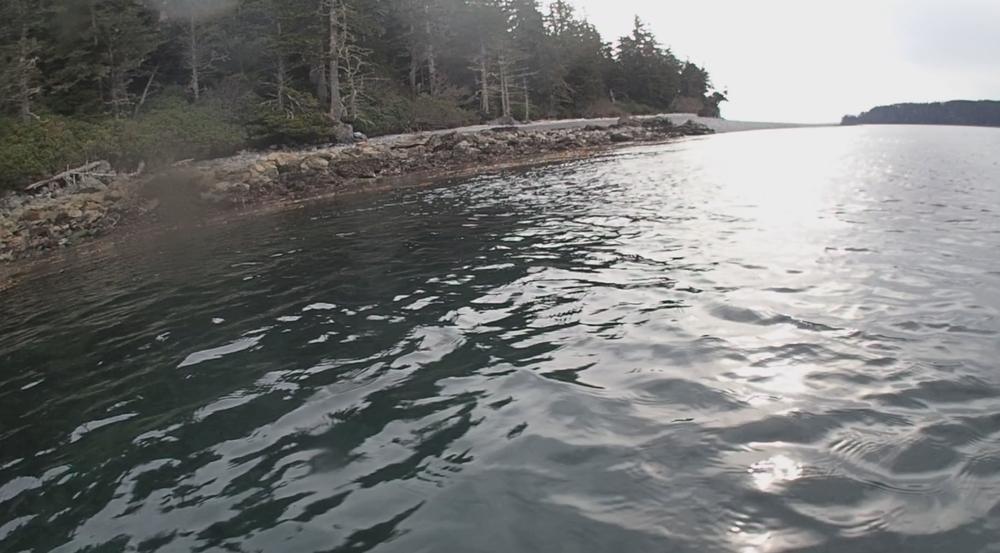 underwater langara island 2 (210).jpg