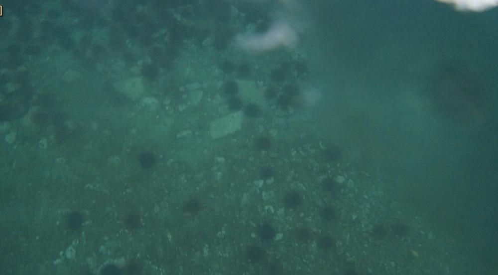 underwater langara island 2 (217).jpg