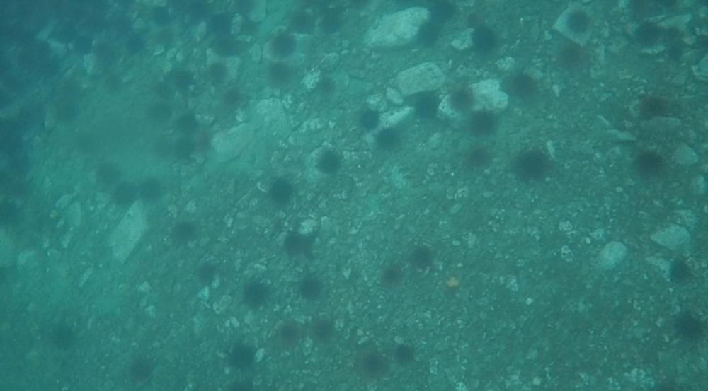 underwater langara island 2 (221).jpg