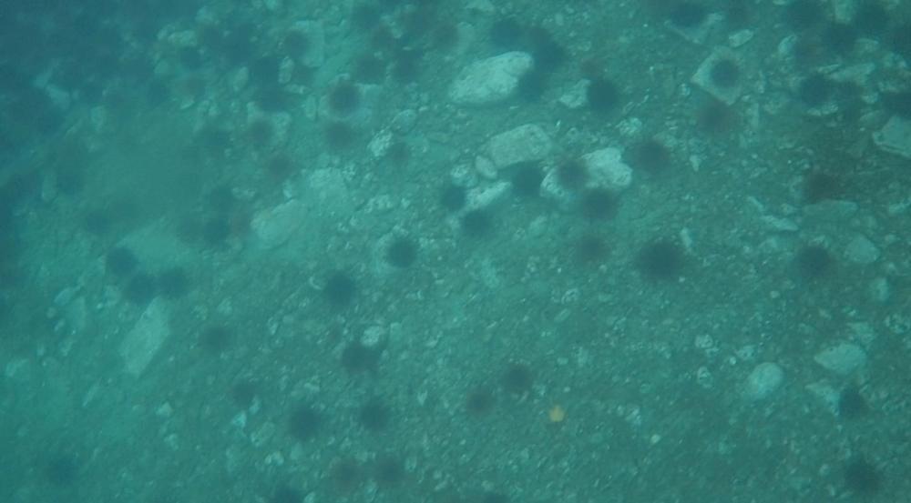 underwater langara island 2 (222).jpg