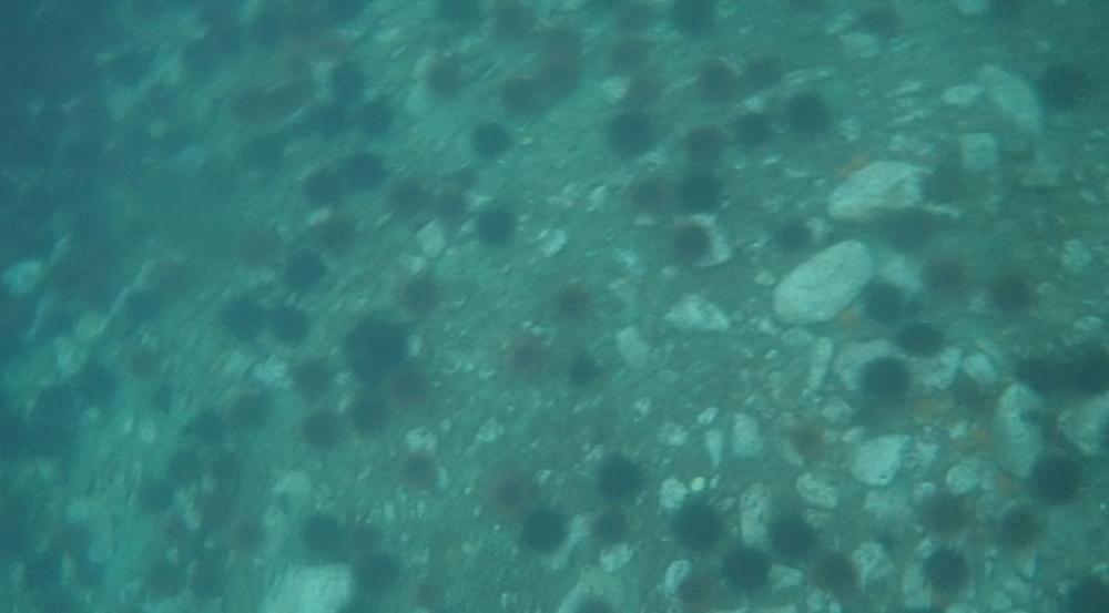 underwater langara island 2 (227).jpg