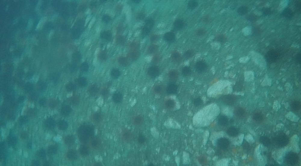underwater langara island 2 (228).jpg